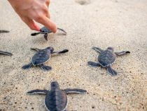 Let the Turtles Die! – What is happening to ITIL training?