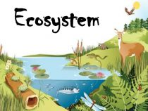 Bring Your Own Eco-System